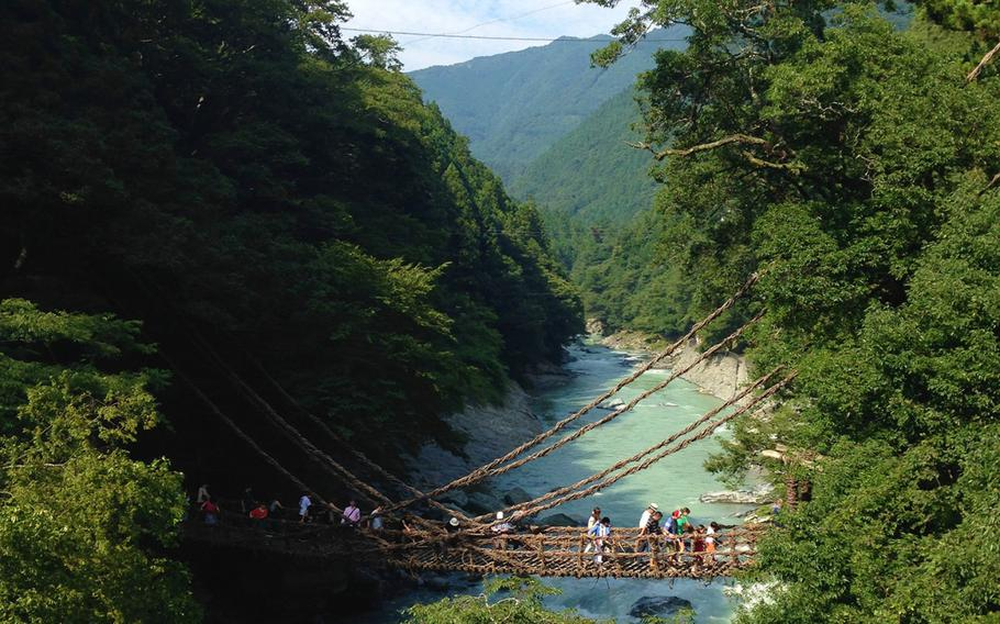 Nishiiyayama Village's vine bridge, Kazura Bashi, is 45 meters long and is covered in Actinidia arguta vines.