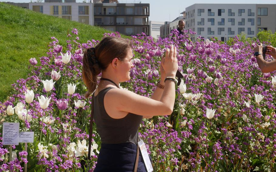 Visitors to the Bundesgartenschau in Heilbronn take photos of the flowers in bloom. In the background are new apartment buildings that have been built on the grounds of Germany's federal garden show.
