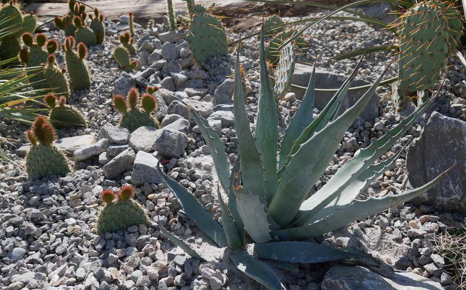A cactus garden at the Bundesgartenschau in Heilbronn, Germany feature a variety of the prickly plants.