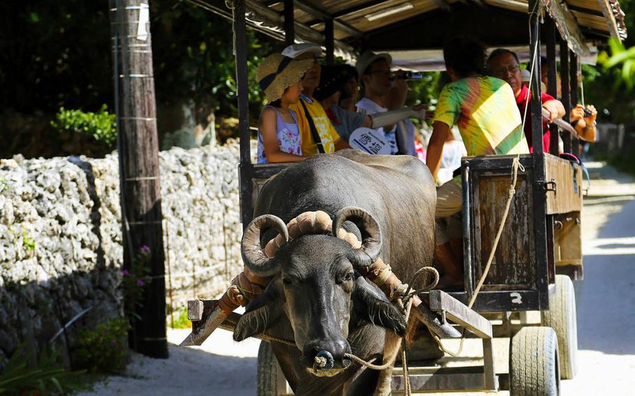 A water buffalo cart goes slow while a guide sings Okinawan folk songs on Taketomi Island.