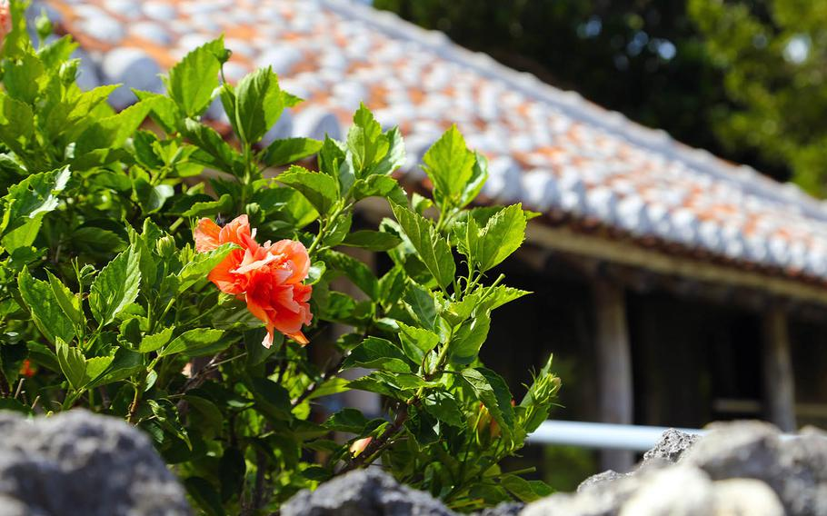 Hibiscus and red-tile roofs are another perfect match on Taketomi Island.