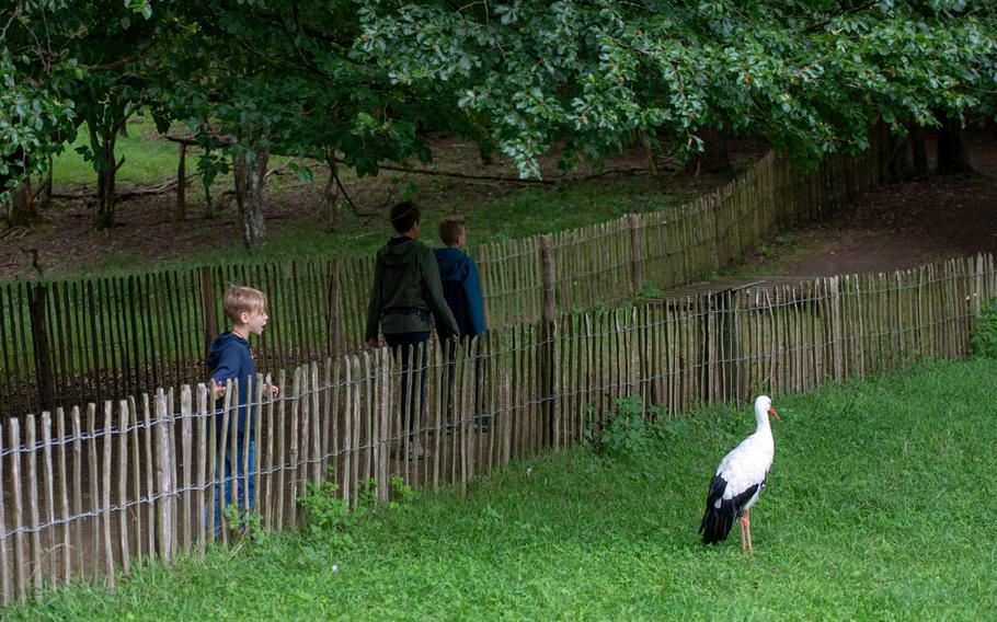 A young visitor looks at a Stork in the wildlife park at the Domain of the Caves of Han, Han-sur-Lesse, Belgium, Aug. 17, 2019.