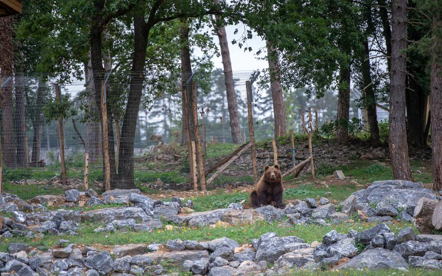 A brown bear takes a seat in an enclosure at the Domain of the Caves of Han, Han-sur-Lesse, Belgium, Aug. 17, 2019.