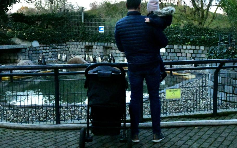 A father and his daughter visit the Humboldt penguin enclosure in Luisenpark, in Mannheim, Germany, on Sunday, Nov. 30, 2019. The penguin enclosure is next to the Schnullerbaum - literally pacifier tree - where young children hang their pacifiers when they or their parents think it's time to give up the habit.