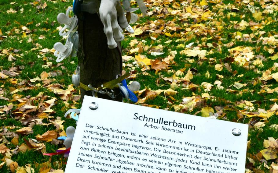 """A plaque at the base of the Schnullerbaum in Landau, Germany, says its Latin name is Arbor liberatae and describes the pacifier tree as """"a rare type in Western Europe."""" Landau's Schnullerbaum was dedicated in 2011."""