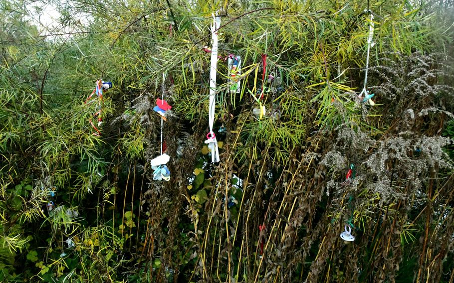 The Schnullerbaum in Luisenpark in Mannheim, Germany, is situated down by the park's lake behind the penguin enclosure. The tree is a little overgrown and unkempt, and many of the pacifiers look like they've been there for years.