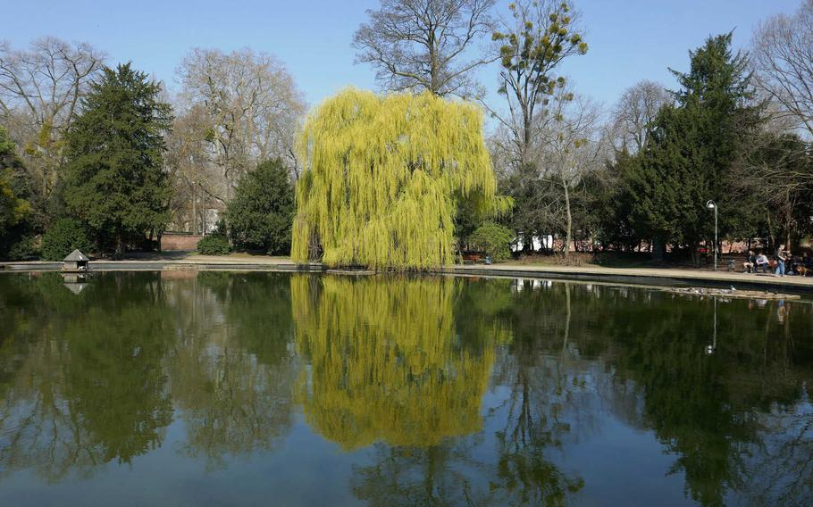 Trees are reflected in the pond in the Friedberger Anlage in Frankfurt am Main, Germany. A greenbelt of parks surround the center of Frankfurt, north of the Main River, where the city's medieval defensive walls once stood.