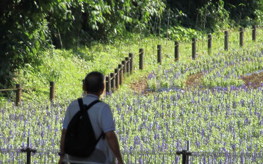 Kurihama Flower World in Yokosuka, Japan, is known for its seasonal flowers and a large Godzilla statue.