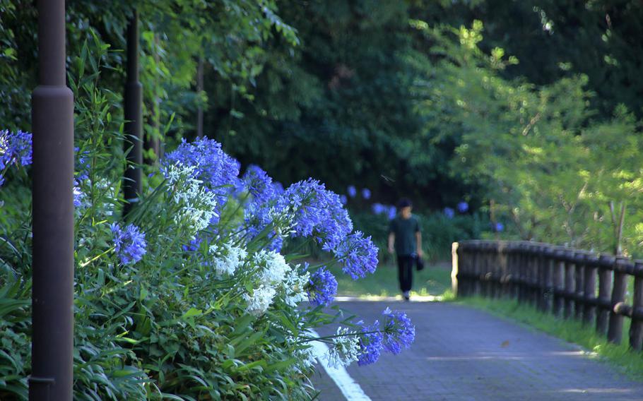Seasonal flowers are abundant at Kurihama Flower World near Yokosuka Naval Base, Japan.