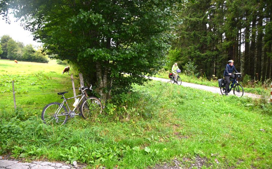 Cows on the left, cyclists on the right on the Vennbahn bike path near Monschau, Germany, on Sept. 1, 2020.  The path travels 77 miles from Aachen, Germany, to Troisvierges, Luxembourg, crossing in and out of Belgium on the way.