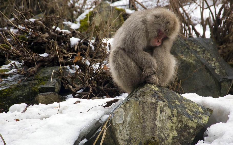 Winter is the most popular time to visit the snow monkeys at Jigokudani in Nagano, Japan, but you can see them during warmer months, too.