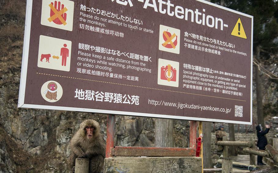Jigokudani Monkey Park is part of the Joshinetsu Kogen National Park in the northern part of Nagano prefecture, Japan.