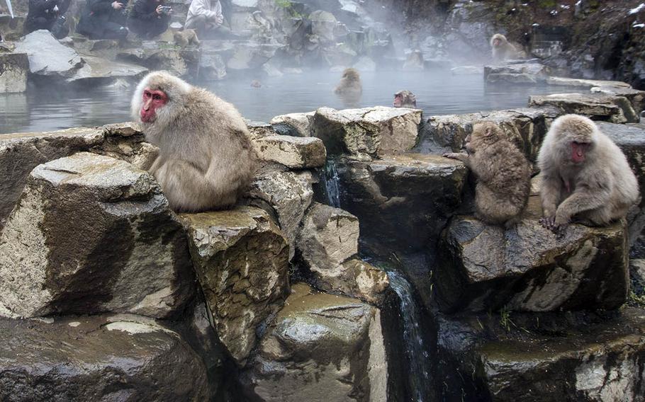 You can see Japanese macaques take hot springs baths during all seasons at Jigokudani Monkey Park in Nagano prefecture, Japan.
