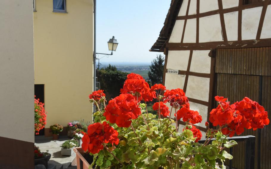 Geraniums soak up sunshine in the picturesque village of Neuleiningen, Germany. The town, perched on a steep hillside overlooking the vast Rhine Valley, is one of many wine villages hikers can stop at along the Pfalz Wine Trail.