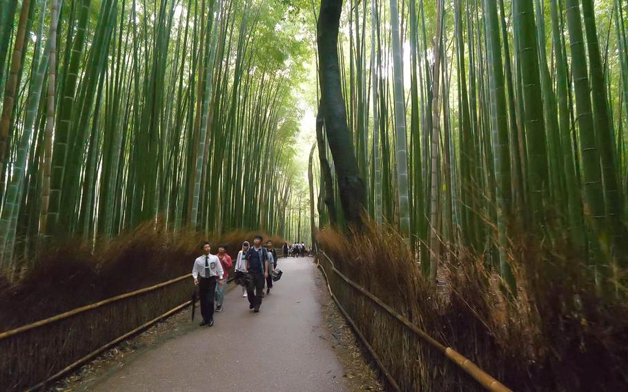 """A YouTuber named Rambalac strolls through a bamboo grove in Arashiyama, Kyoto, in this screenshot from one of his """"Videowalks"""" from 2017."""