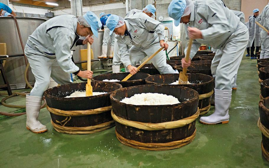 Sake brewers at the Kiku Masamune in Nada, Japan, make kimoto-style yeast starter used in making sake.