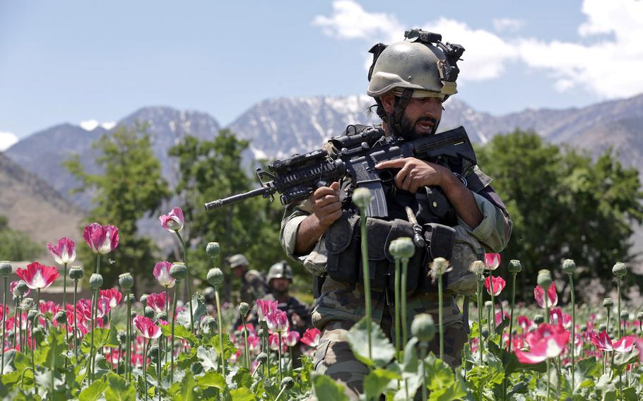 An Afghan National Army commando leads the way on a patrol through a poppy field during a clearing operation in the Khugyani district of Nangarhar province, Afghanistan, on May 9, 2013.