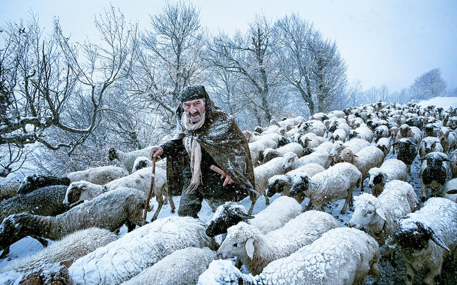 """Saeed Barikani, """"Old Shepard""""   An old shepherd that had been surprised by snow storm in Gilan's countrysides in the north of Iran"""