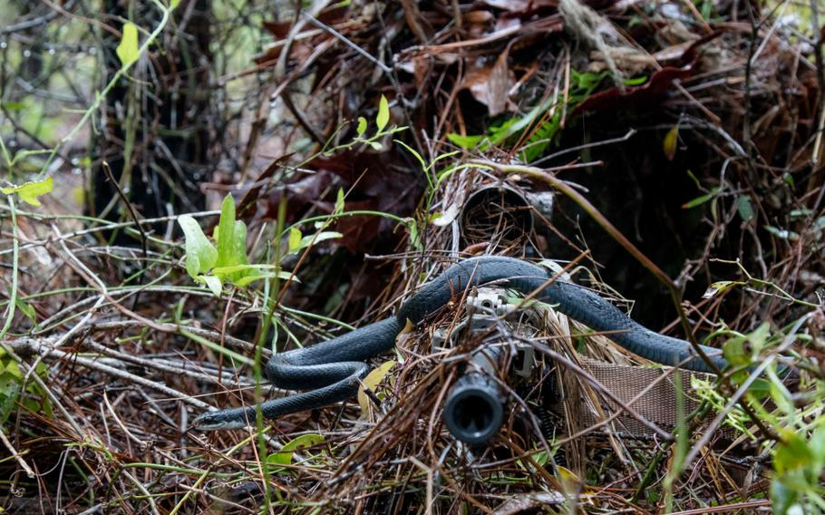 During an 1-173 Infantry training exercise this month at Eglin Air Force Base, a southern black racer snake slithered across the barrel of junior U.S. Army National Guard sniper Pfc. William Snyder's rifle.