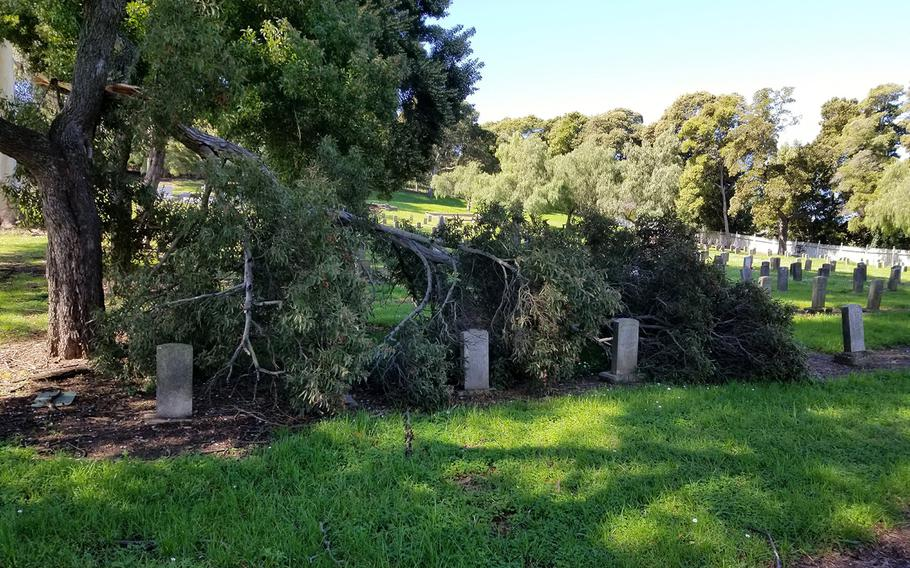 The Mare Island Naval Cemetery, located in Vallejo, Calif., is marked by neglected and fallen old pepper and eucalyptus trees. Other concerns threaten the cemetery, from sinkholes to invasive tree roots, despite efforts by area volunteers to upkeep the site. The cemetery was maintained by the neighboring Mare Island Naval Shipyard until it was closed through the Base Realignment and Closure Act in 1996.