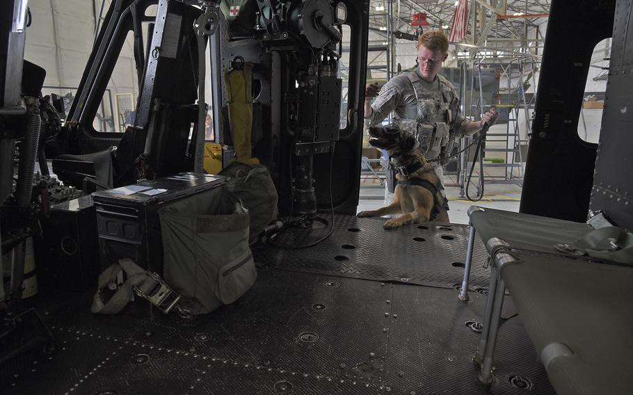 Staff Sgt. Jimmy Wilson, 92nd Security Forces Squadron military working dog handler, runs through a detection exercise with Fanni July, 31, 2018, at Fairchild Air Force Base, Wash.