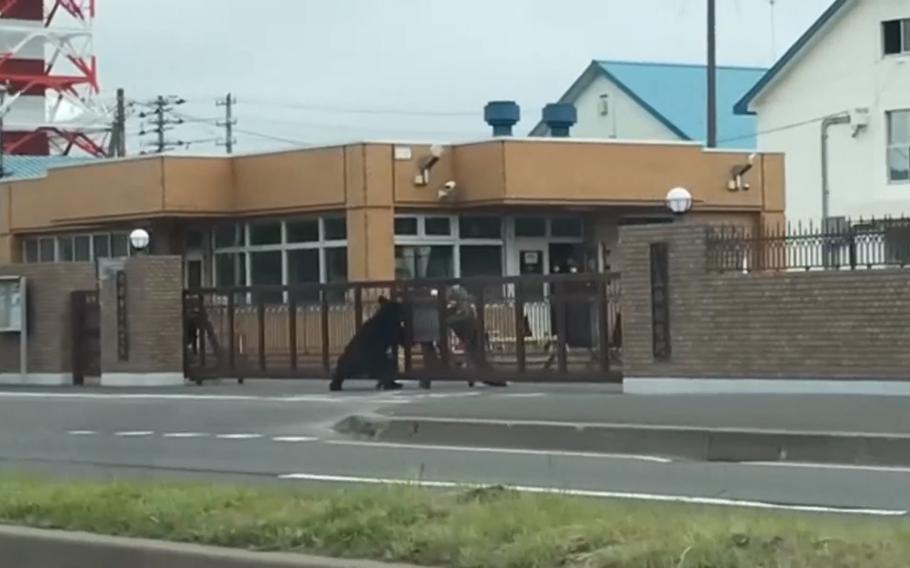A bear attacks a Japan Ground Self-Defense Force member outside Camp Okadama, Hokkaido, Friday, June 18, 2021.