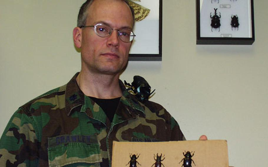 Lt. Col. Geoff Crawley has been collecting insects — mainly beetles — for the last 20 years. A radiologist at the medical center at Aviano Air Base, Italy, Crawley has come across several beetles during his stay at Aviano, including the three European stag beetles that he's holding in this picture.