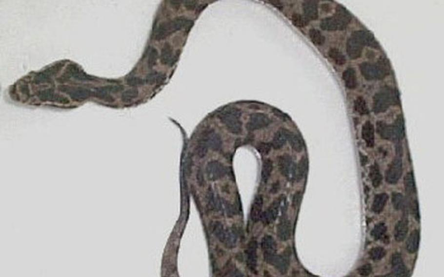 Mamushi snake.