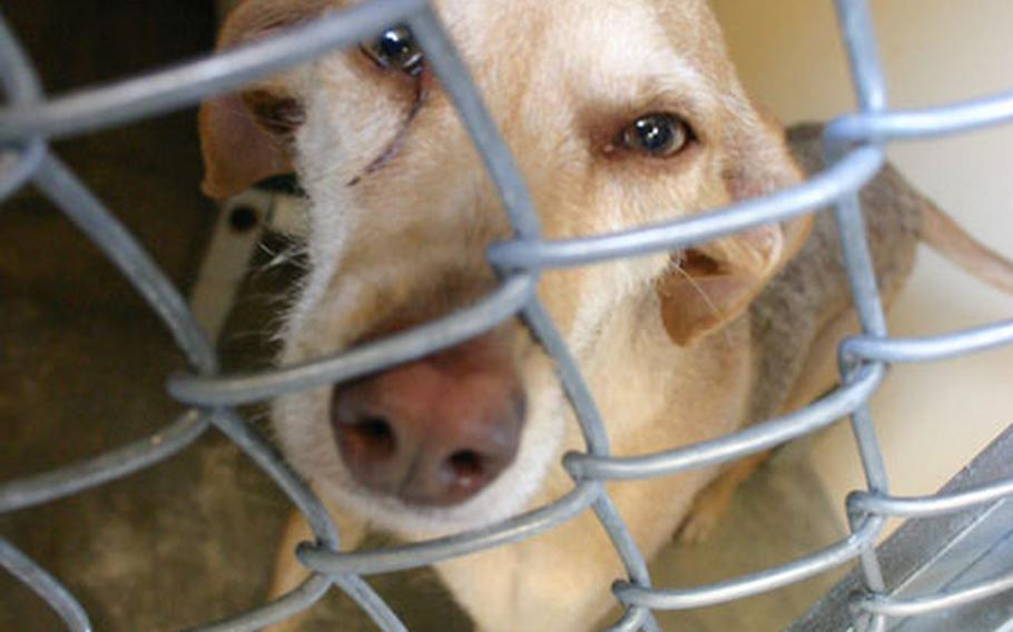 Sofia, an occupant of the new Stray Animal Facility at Sigonella, Sicily, stares out from her kennel.