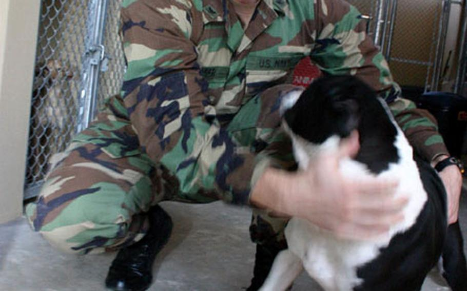 Gunnar Gorder, a photographer's mate third class stationed at NAS Sigonella, Sicily, socializes with an occupant of Sigonella's new Stray Animal Facility.