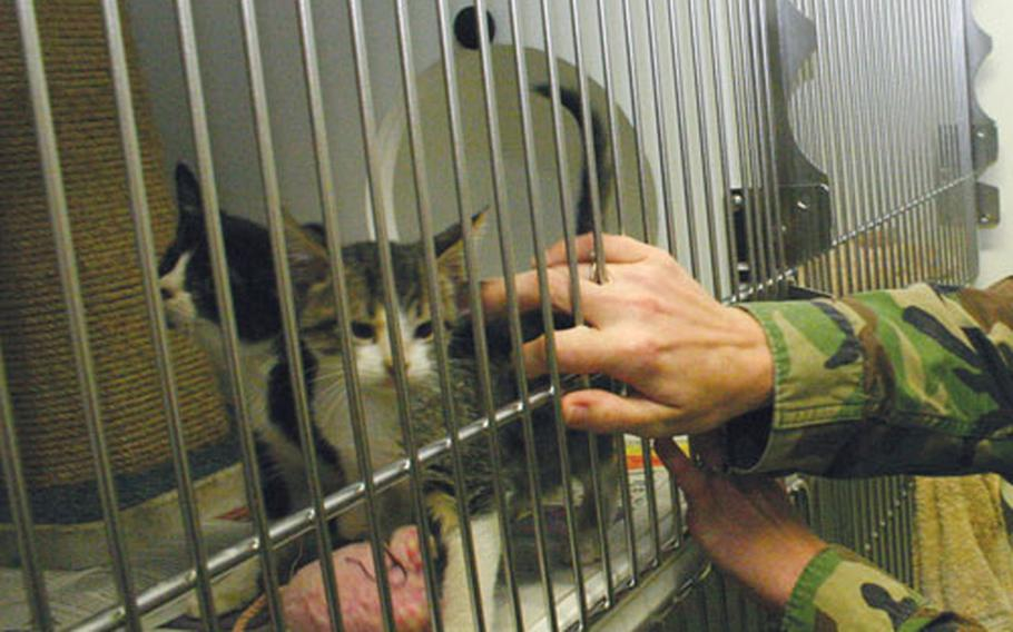 The hands of Shelly Kennington, a ship's serviceman third class with NAS Sigonella, Sicily's Stray Animal Facility, check on two of the occupants of the new facility, which opened Monday.