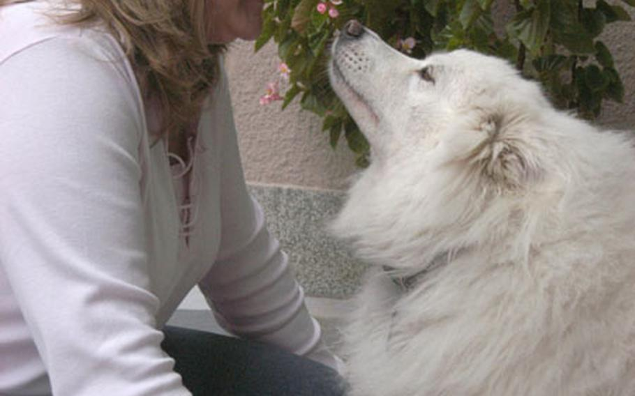 Linda Lorenzana with her friendly Samoyed, Sasha. Sasha plays with soldiers and participates in Stress Control Center pet therapy.