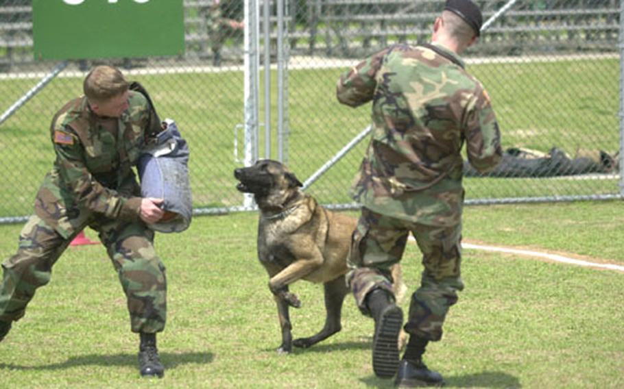 """A handler calls in his canine, Indy, during the """"controlled aggression"""" phase of the first U.S. Forces Korea Military Working Dog competition Wednesday at Yongsan Garrison."""