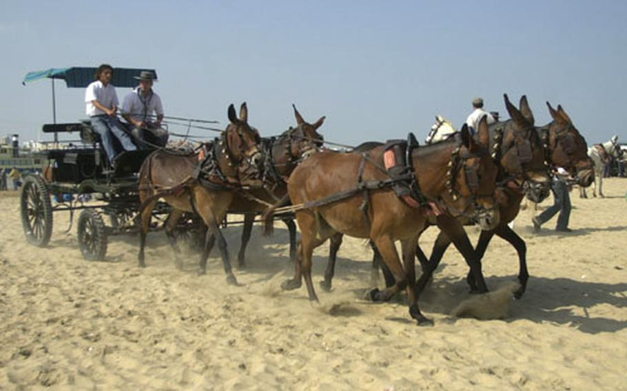 A cart on Wednesday is pulled through the beach at Donana National Park, near Sanlúcar de Barrameda, Spain.