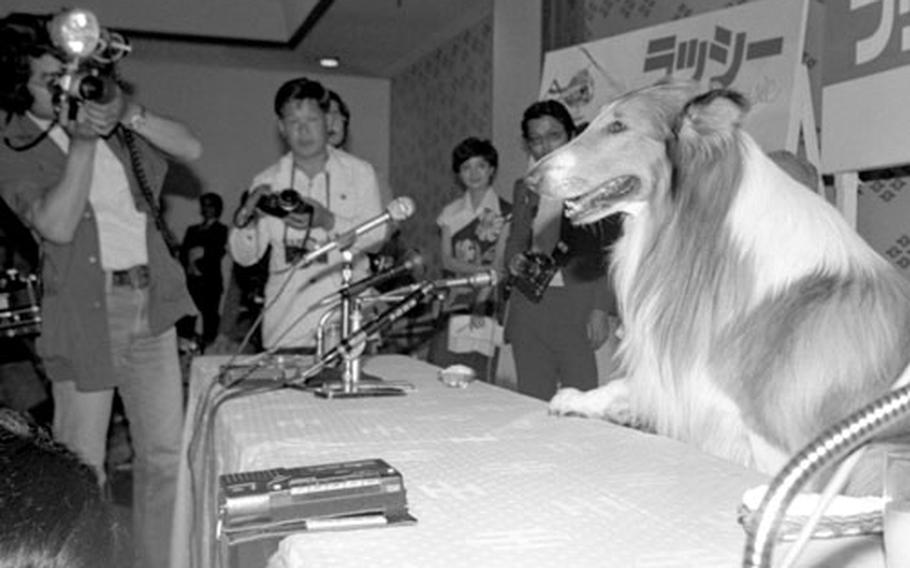 Lassie in Tokyo.