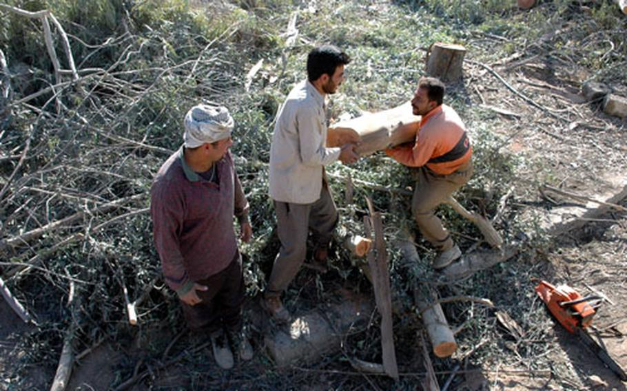 Iraqi workers clear a patch of trees and brush to make room for renovations under way as Camp Normandy prepares to shrink in size and slash the number of U.S. troops stationed at the base.