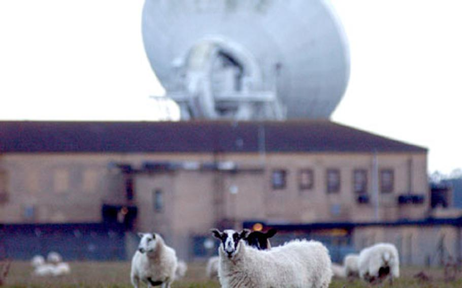 Grazing in the shadow of the base's communications equipment, one of RAF Croughton's on-base flock of sheep looks up from lunch recently. Fenced in on the base interior, the flock hangs out between the on-base services and the satellite dish in the background.