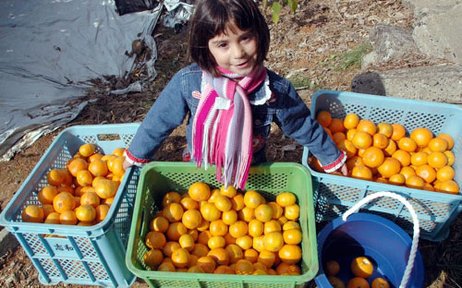 Chloe Stevens is proud of her haul of mikans during Tuesday's field trip to an orchard near Sasebo Naval Base's Hario Housing Village.