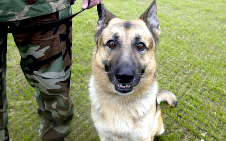 Desant is a military working dog at RAF Mildenhall and has been assigned to the base for the past year.