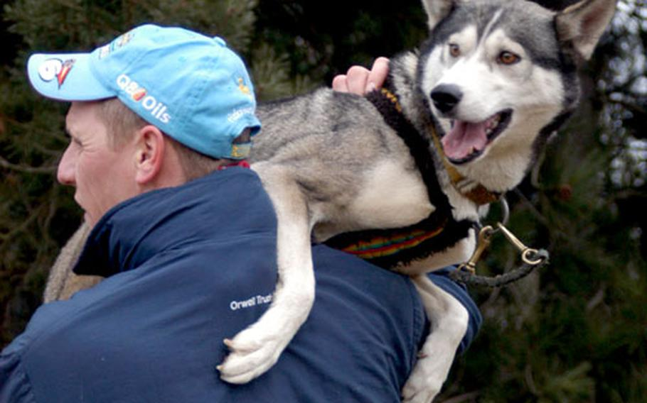 In order to keep her calm before a race and prevent her from tiring herself out by tugging at the harness before starting time, musher Tim Hart holds on to Tallulah, the lead dog for a friend's team.
