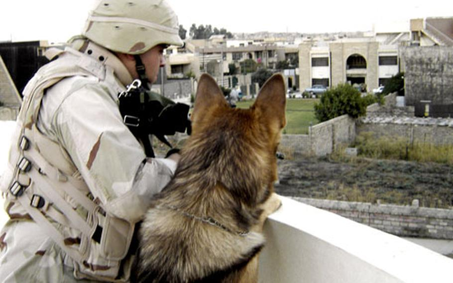 Anthony Gonzales and his military working dog, Ben, stand on the roof of a building, providing security after a suicide vehicle exploded a Stryker. Shortly after this photo was taken, a rocket-propelled grenade exploded near Ben while he was running in a field. The two were trapped in a firefight behind a small wall in Mosul, Iraq.