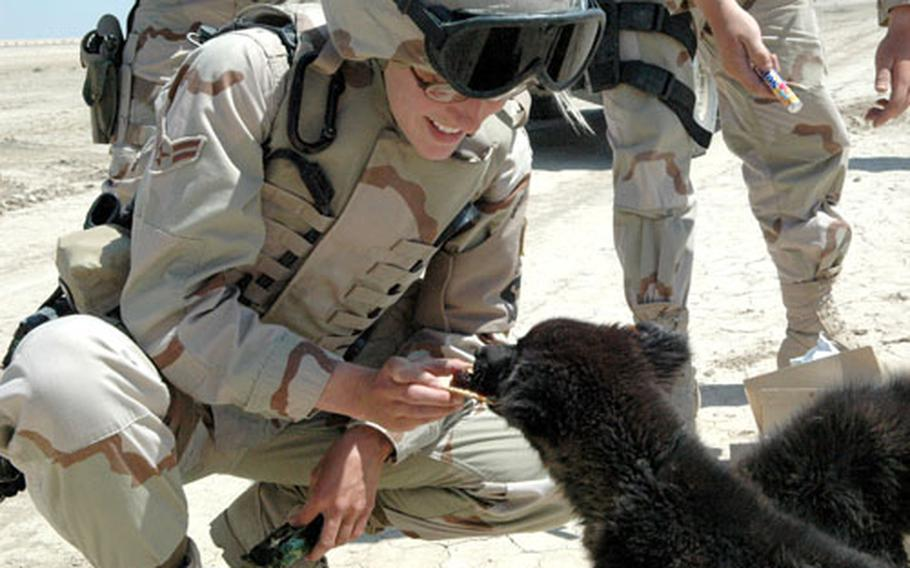 Airman 1st Class Kristen Fluegel, 22, of Carlsbad, Calif., feeds crackers and jelly to puppies during a recent patrol.