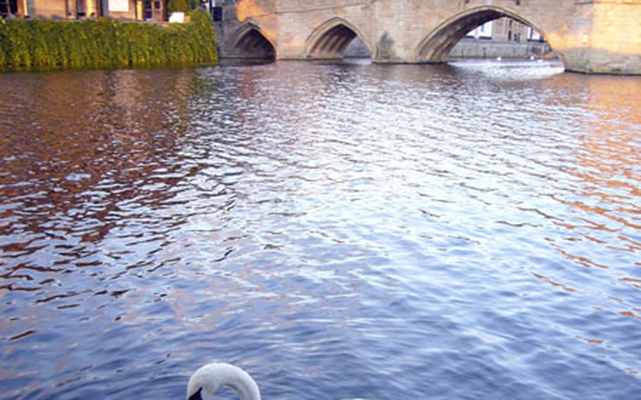 A swan floats by along the River Great Ouse in front of the Waterside Restaurant in St. Ives. The historic 15th-century chapel bridge is in the background.