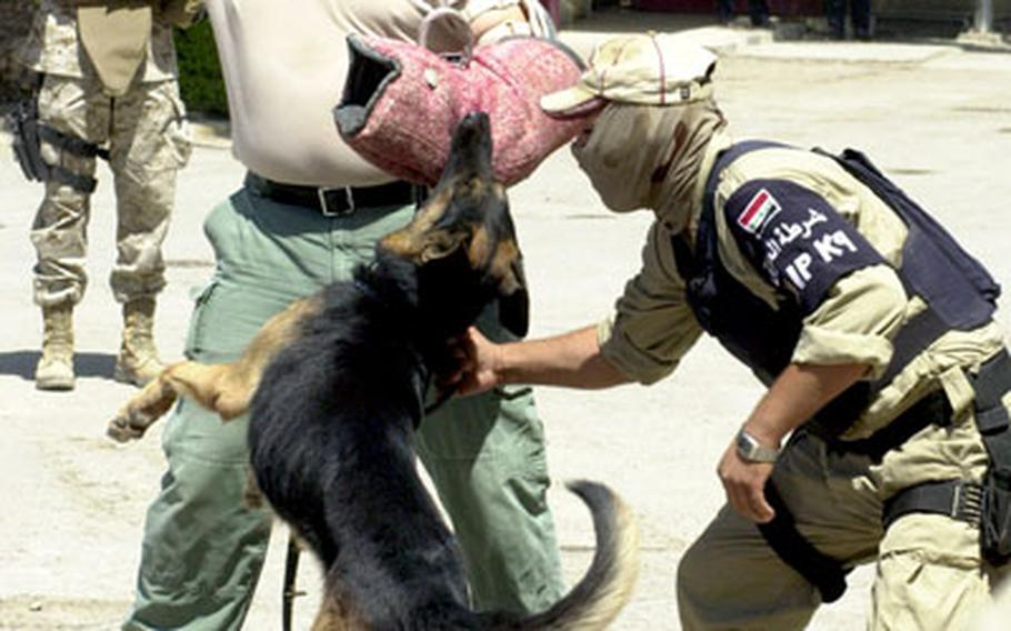 """Dog handler Chester Gilbert wears a protective """"bite sleeve"""" as he plays the bad guy during a demonstration of Iraqi police prowess Tuesday in Baghdad. The Iraqi policeman used the dog to find explosives, then to attack Gilbert as he tried to resist """"arrest."""""""