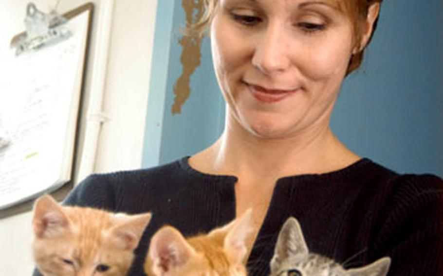Havingkittens in the house is like taking care of newborn humans, says volunteer Sheila Dove. Through a new program at Yokosuka Naval Base, abandoned kittens are raised and socialized in foster families before they are ready for adoption at four months old.
