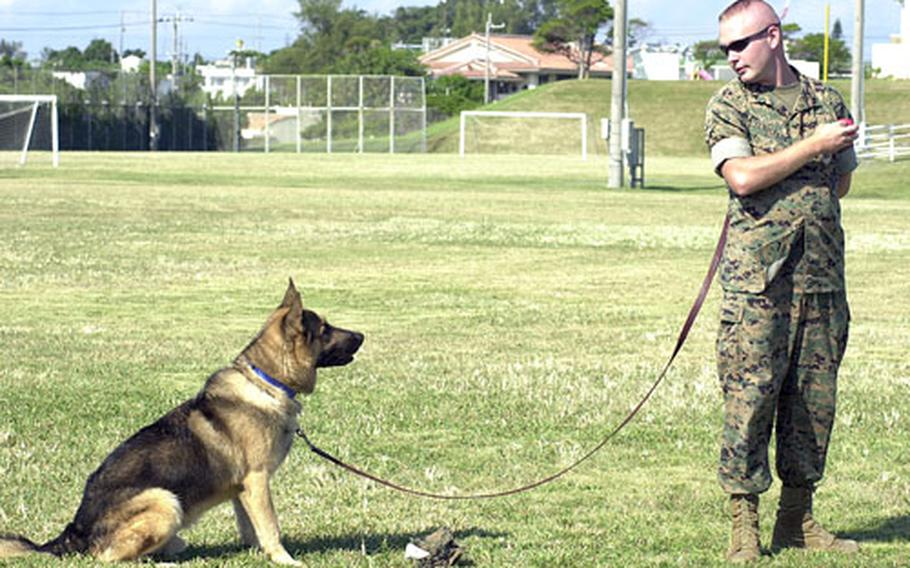 """Five-year-old Amor sits in front of a hat to indicate to Cpl. Matthew Pendleton, his handler, that he has found the """"drugs"""" during a demonstration Thursday for students at Bechtel Elementary School."""