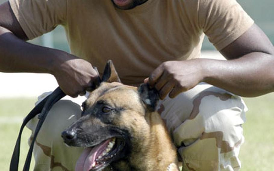 Petty Officer 3rd Class Benjamin Brown, a master-of-arms and dog handler with Naval Security Forces Bahrain, Military Working Dog Division, is trying to teach Rocky how to low crawl with him.