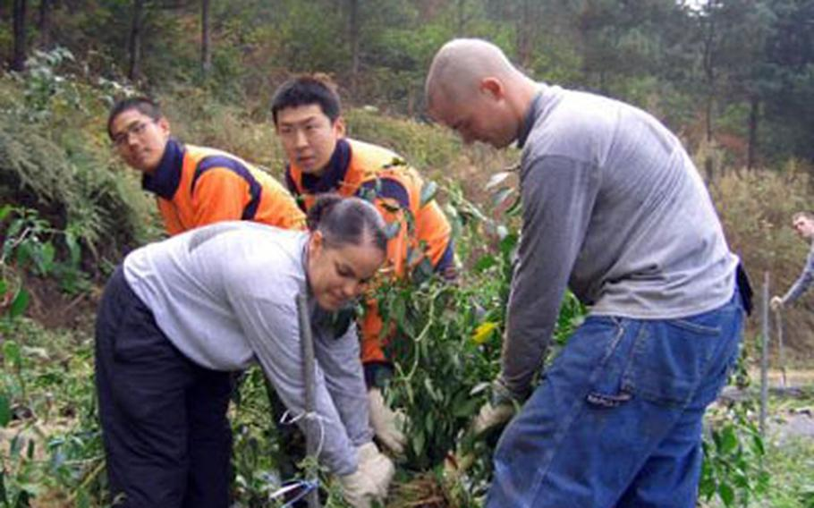 U.S. and South Korean soldiers help out at Shin Hyun-soo's farm in Yangju on Thursday. About 25 U.S. soldiers and 15 South Korean soldiers harvested crops for Shin, whose 13-year-old daughter was killed by a U.S. military vehicle on Highway 56 in 2002.