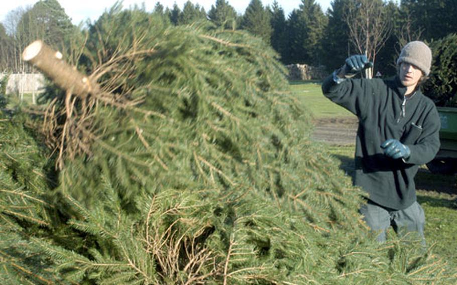 Thomas Cloete drops off a newly cut Christmas tree at the estate.
