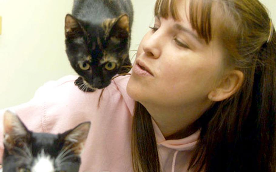 Yokosuka's Pets Are Worth Saving shelter is at capacity and cannot accept any more pets, PAWS president Dawn Zeumalt said Thursday. The shelter currently has about 40 cats and kittens, which is hard for the current volunteer staff to handle.